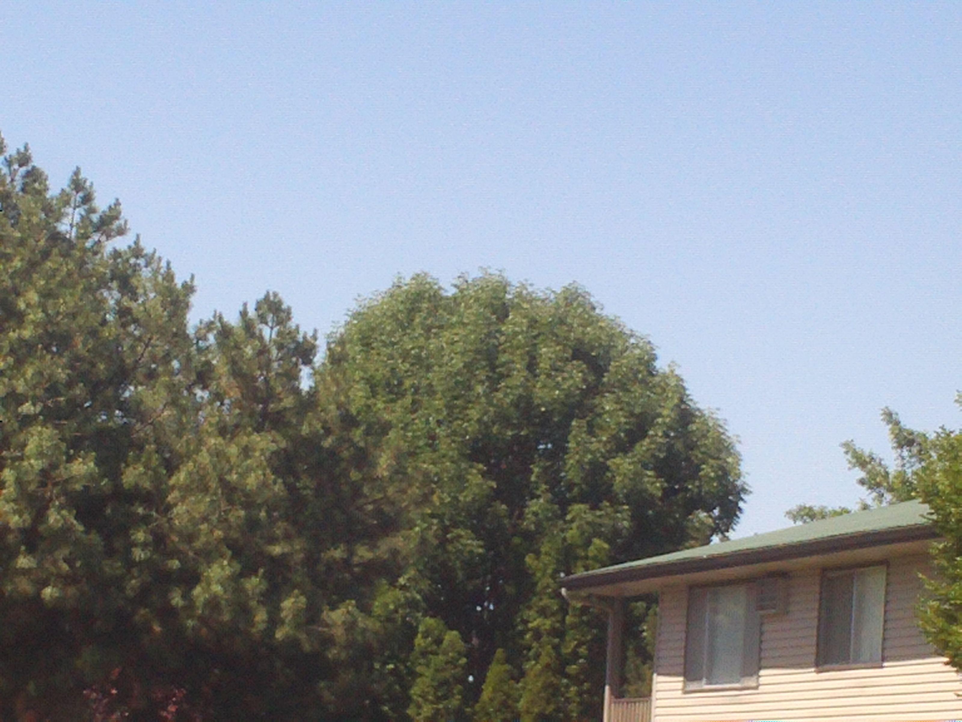 PT  JUNE 2014 TREES IN NAMPA IDAHO