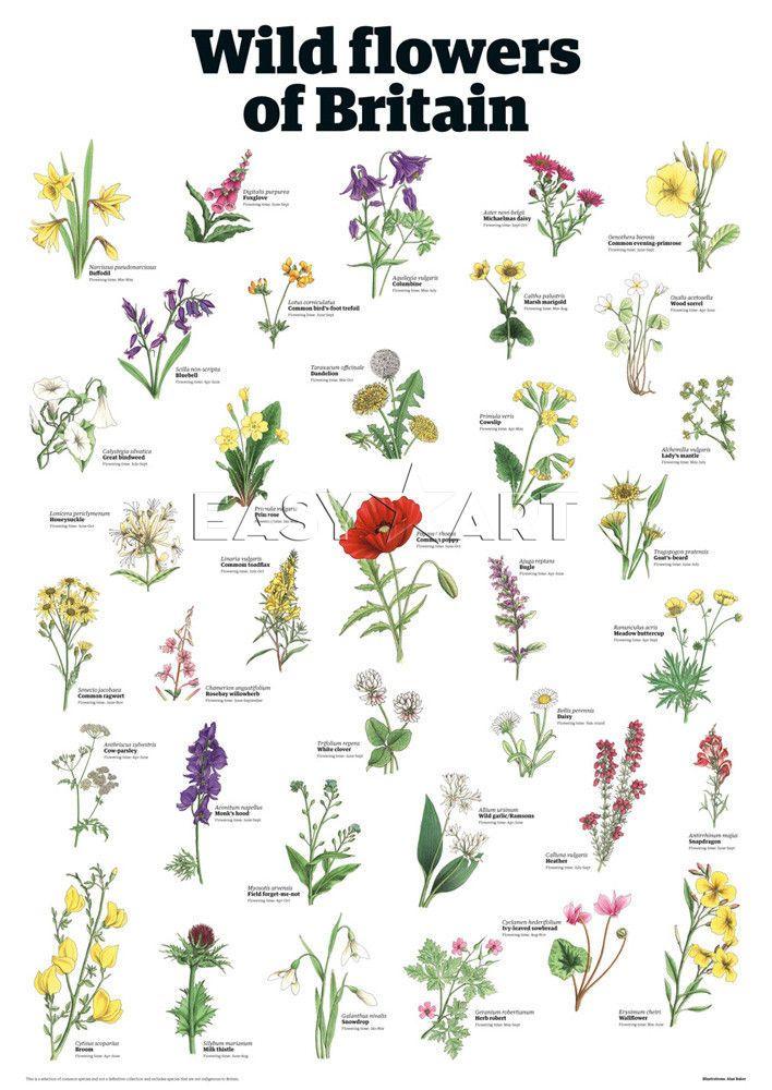 Wild flowers of Britain Custom Art Print by Guardian