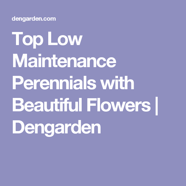 Top Low Maintenance Perennials with Beautiful Flowers | Dengarden