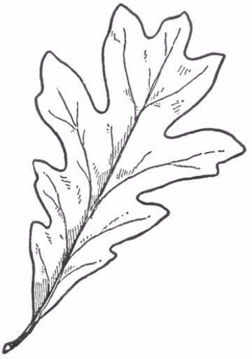 hojas de otoño para colorear y decorar | 0 = = > LINE ART ...