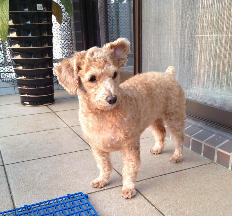 Adopt Millie on Pet adoption, Adoption, Animal rescue