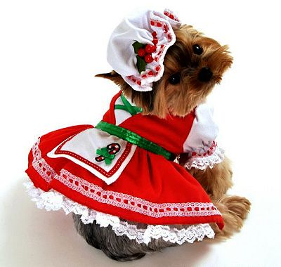 Candy Cane Cutie Christmas Dog Costume Small Dog Costumes