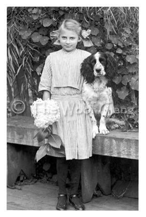 Vintage Photo From The Woof Gang Spaniel Art Vintage Dog Springer Dog
