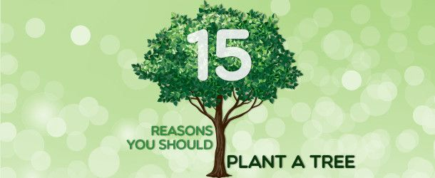 15 Reasons You Should Plant A Tree Today Plymouth Rock Trees To