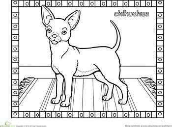 Chihuahua Dog Worksheet Education Com Coloring Pages Cat Coloring Book Dog Coloring Page