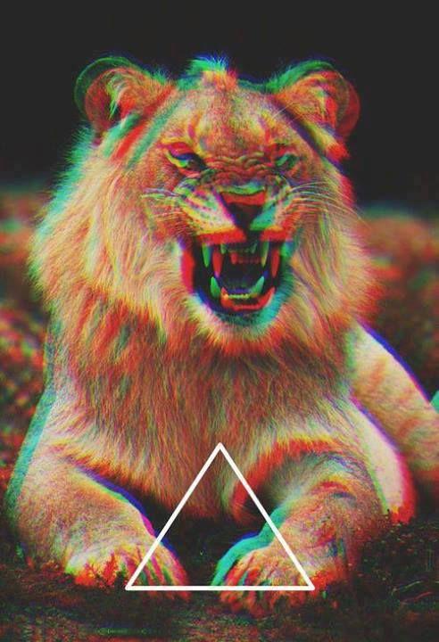 Triangle Lion Wallpaper Pinterest Hipster Wallpaper