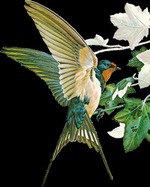 Птичка на веточке в 2020 г. | Рисунок птиц, Птички и ...