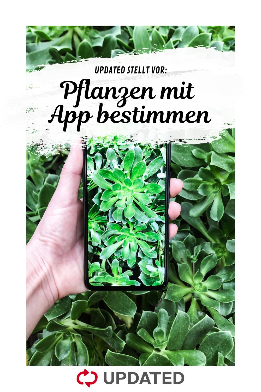 Pflanzen Bestimmen Per App Mit Diesen 7 Anwendungen Otto Pflanzen Garten Anpflanzen Pflanzen Erkennen