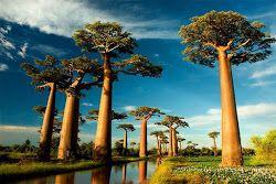تسعة من أكثر الأشجار سحراً وروعةً في العالم