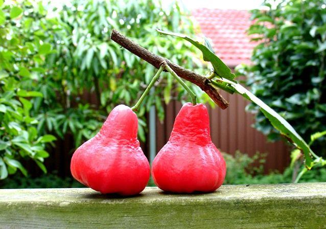 Late Season Flowering Cherry Trees For Your Garden