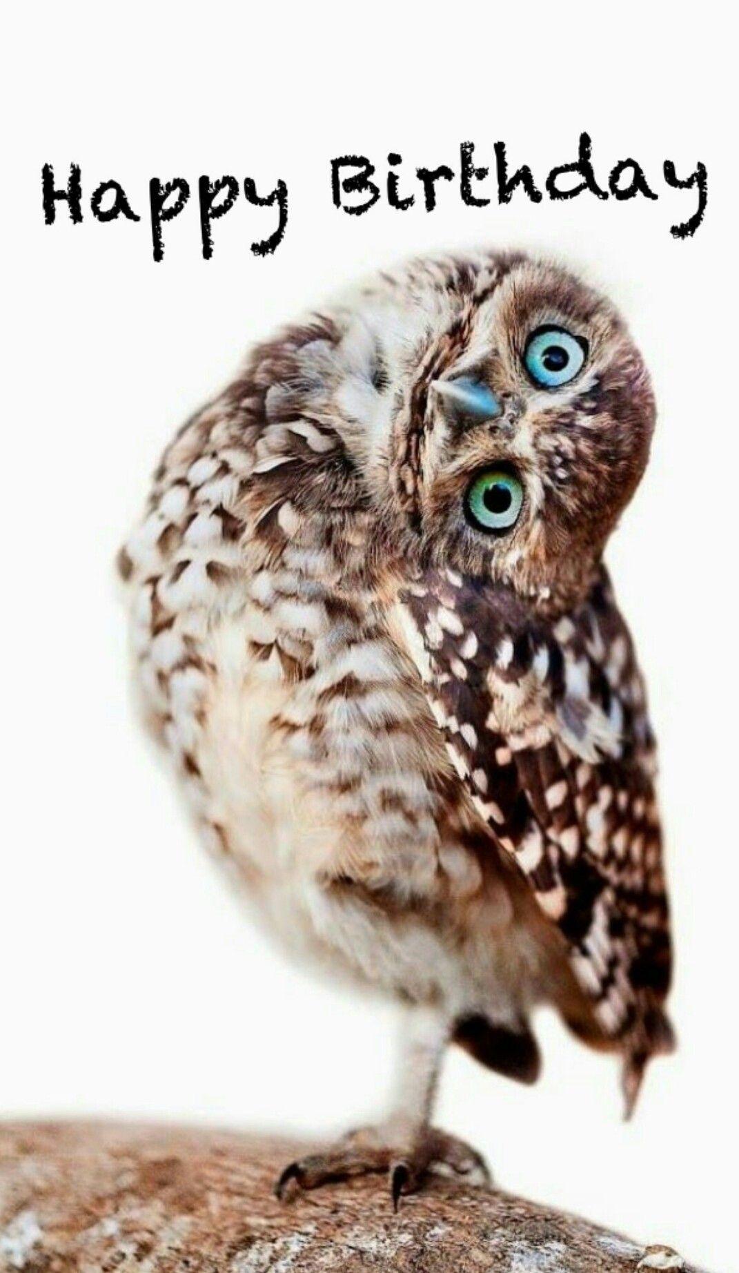 Pin By Terri Taylor On Greetings Quotes More Happy Birthday Owl Birthday Meme Birthday Humor