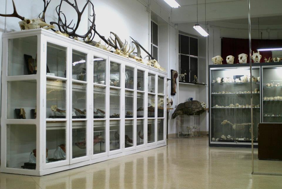 Los esqueletos y osamentas de especies animales eran empleados con ...