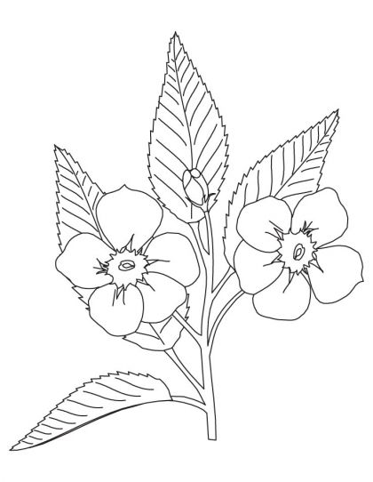 Apple Blossom Coloring Page Apple Tree Drawing Tree Drawing