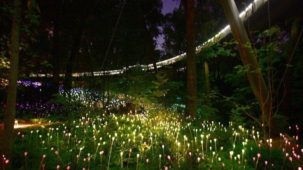 Atlanta Botanical Garden's Light Display is Rather Dazzling