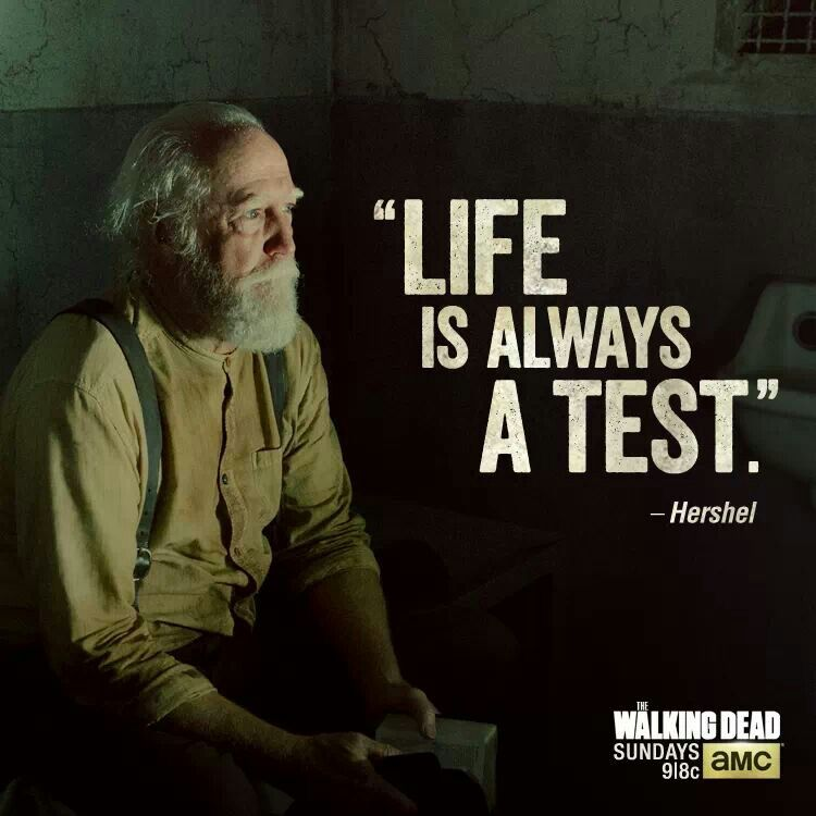 Quote For The Dead: Best Quotes From Walking Dead. QuotesGram