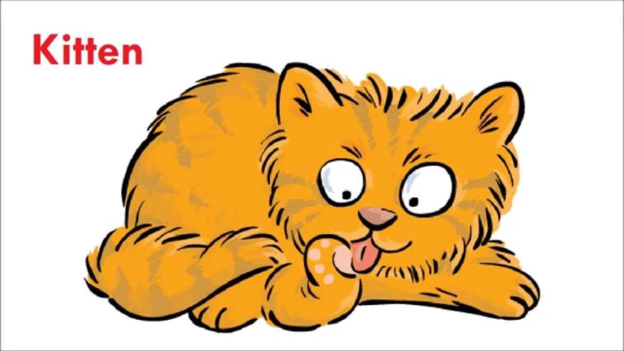 Letter K Things That Start With The Letter K Orange Tabby Cats Tabby Cat Orange Tabby