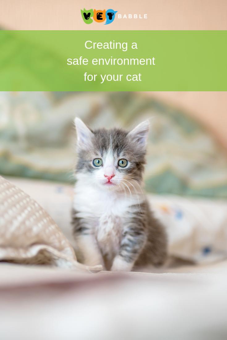 Bringing A Cat Home To A Safe Environment Vetbabble Kitten Proofing Kitten Food Raising Kittens