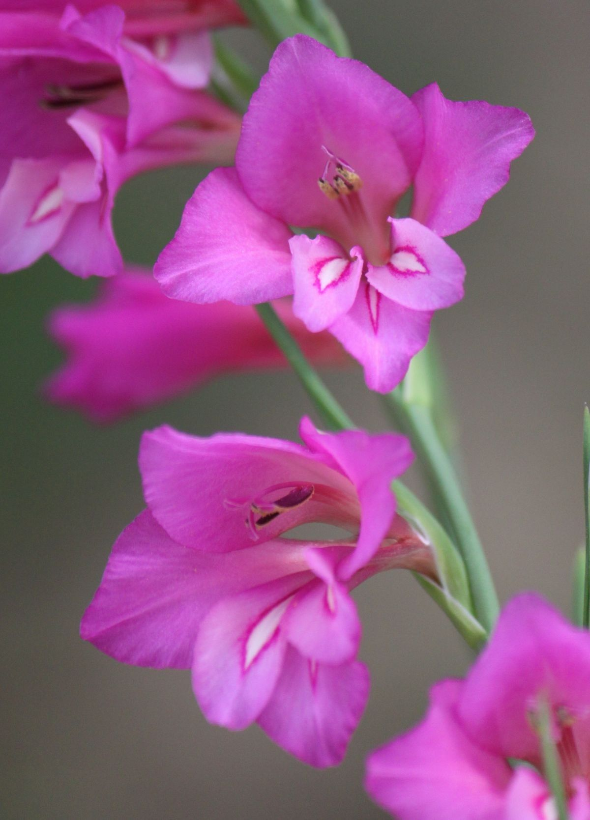 Pin By Melissa Johnson On Orchids Pinterest Orchids Flowers And