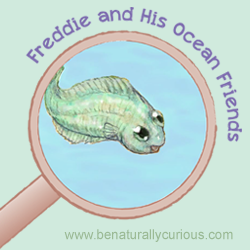 Freddie is a flounder who is curious about why he looks different from his friends–and, for that matter, from his grown-up parents!  The Freddie and His Ocean Friends mini-course introduces different forms of life in the ocean, both plankton and nekton, and explains how they are interconnected in a food web. You'll learn that not …