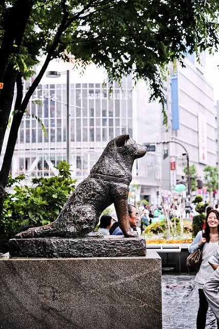 shibuya station  hachiko
