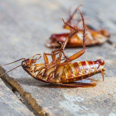 Diy Pest Control How To Prevent And Get Rid Of Cockroaches Diy