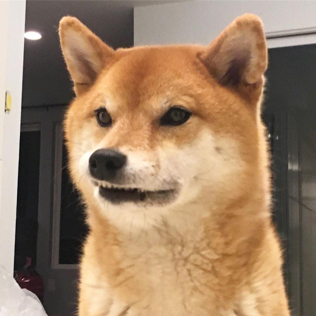 Z E L D A On Instagram When U See Some0ne Eat Froop Loomps Without Mlek Zeldaboom Shibainu Shiba Cute Dogs Shiba Inu Funny Dogs