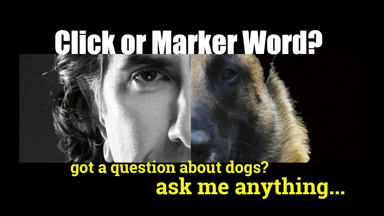 Clicker Or Verbal Marker Ask Anything Dog Training Video