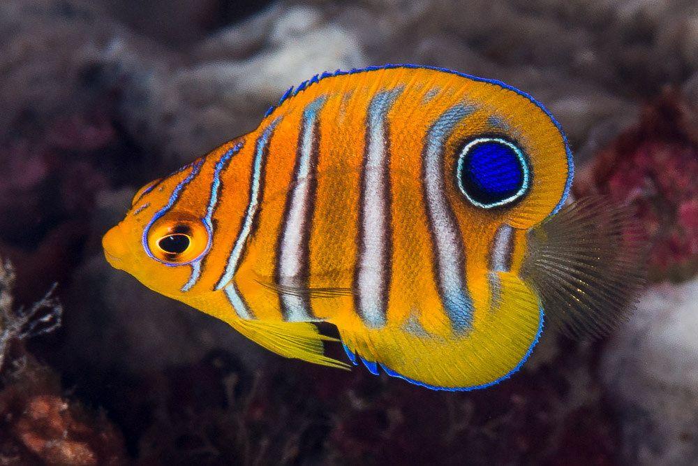 Pin On Reef Aquarium