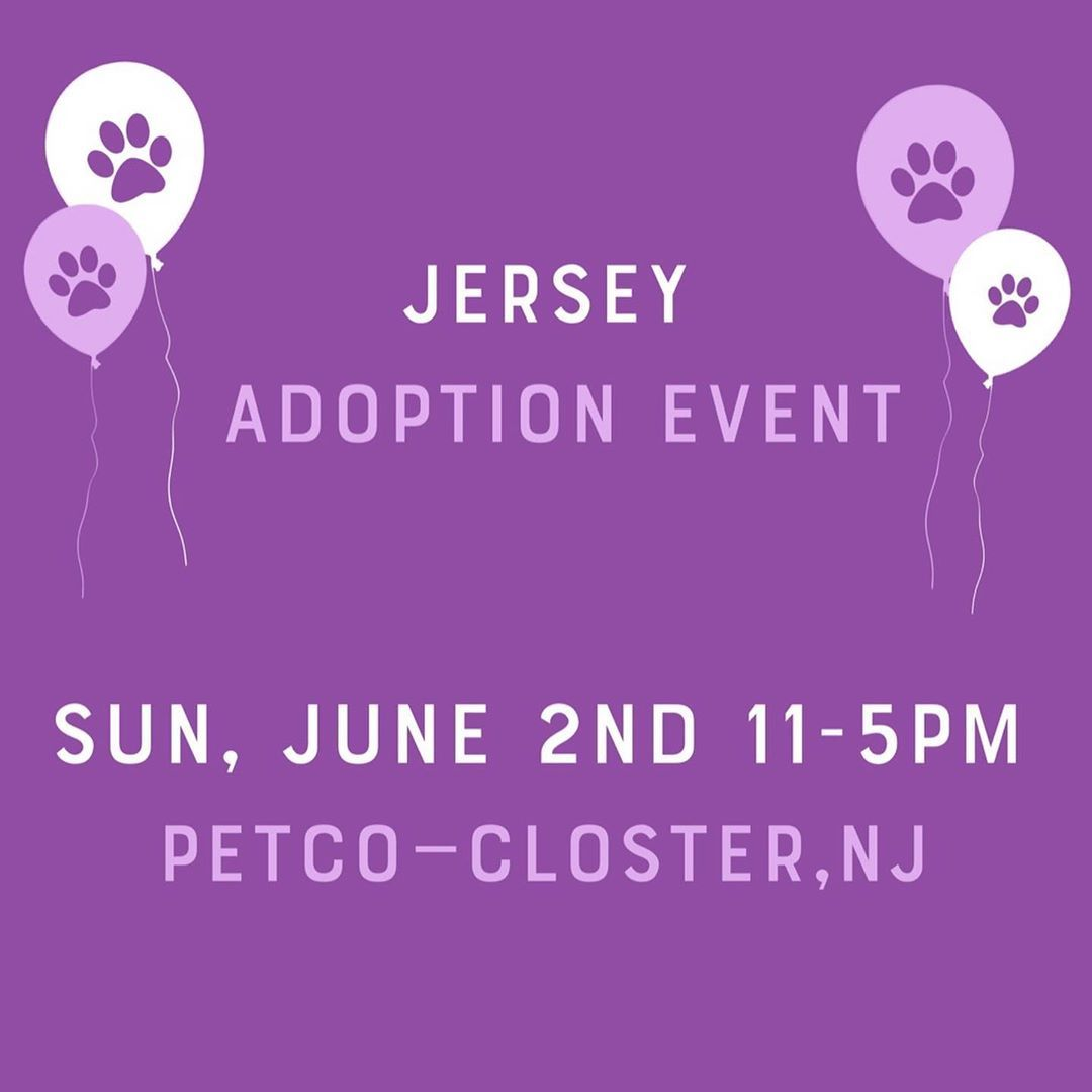 You Can T But Love But You Can Adopt It This Sunday Over A Dozen Pups Will Be At Petco In Closter Nj From 11 5p Pet Finder Petco Heartworm Prevention