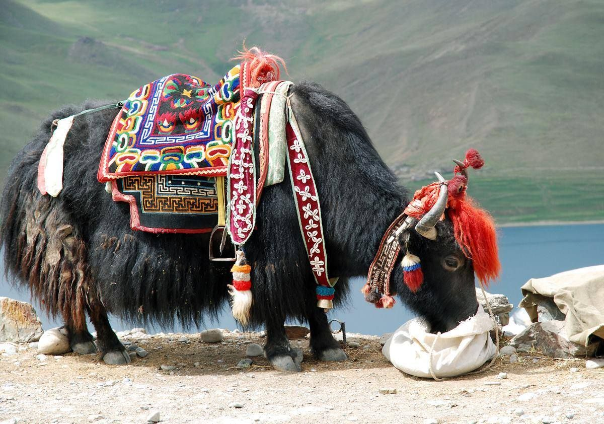 Tibetan carpets were also used as saddles. These pieces were made more robust through fabric or felt lining.