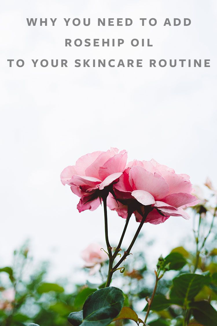 Why You Need To Add Rosehip Oil To Your Skincare Routine Jojotastic Rosehip Oil Rosehip Oil Benefits Skin Care Routine