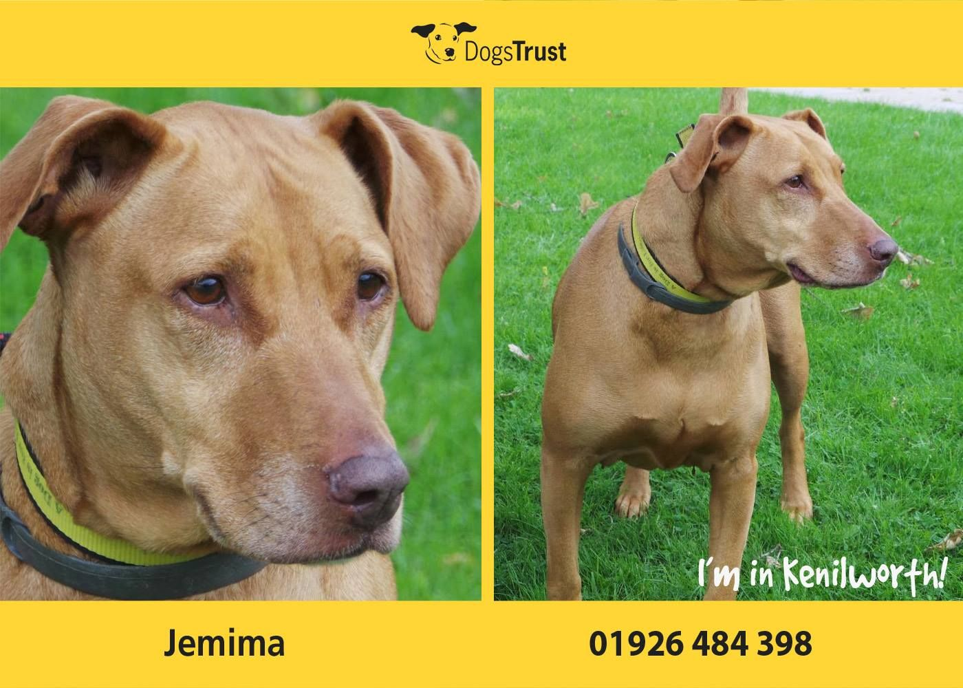 Jemima Here Is A Sensitive Girl From Dogs Trust Kenilworth She Is