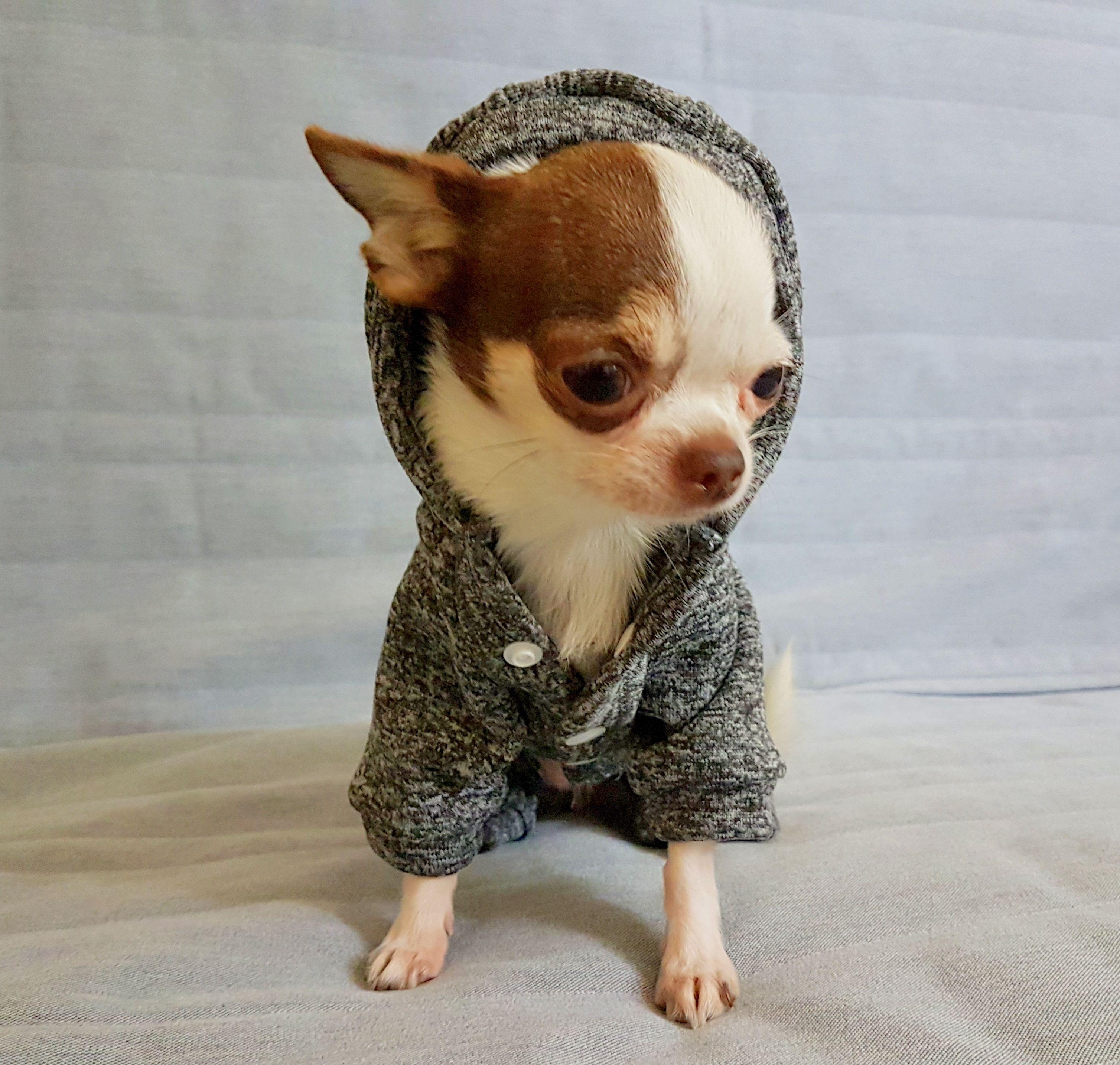 Grey Dog Sweater Grey Fleece Dog Hoodie Coat Dog Bottom Etsy Cute Chihuahua Chihuahua Puppies Chihuahua