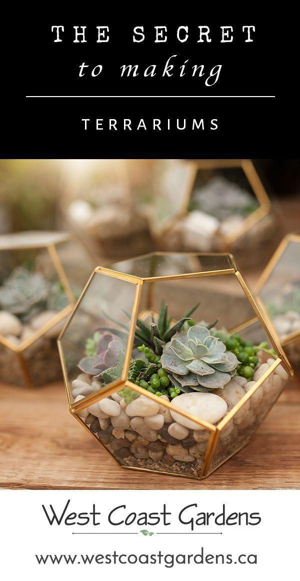 Make Your Own Succulent Terrarium | House + Home T