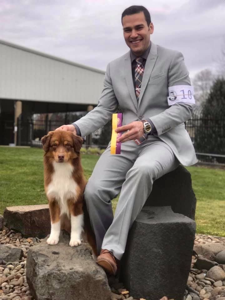 Timeless Aussies in 2020 American shepherd, Aussie, Timeless