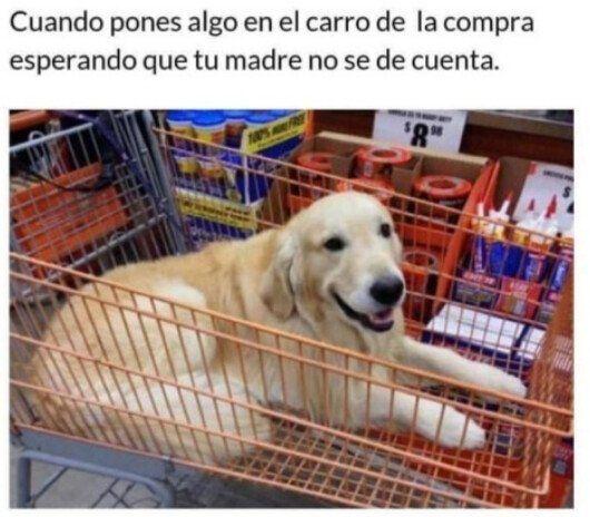 Top Memes Nuevos En Espanol Memesnuevos Top Memes Divertidos Memes De Perros Chistosos Mascotas Memes