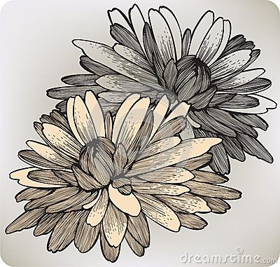 Chrysanthemum Flowers 2 November Piece Daddy And Christian Bday Month Light Yellow One And Light Flower Drawing Chrysanthemum Drawing Chrysanthemum Tattoo