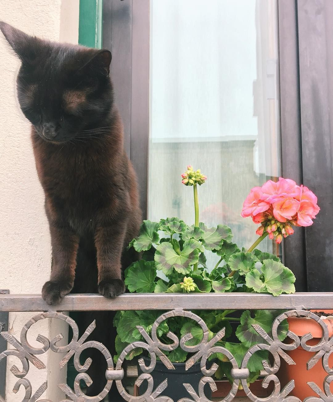 Pretty kitty on a windowsill