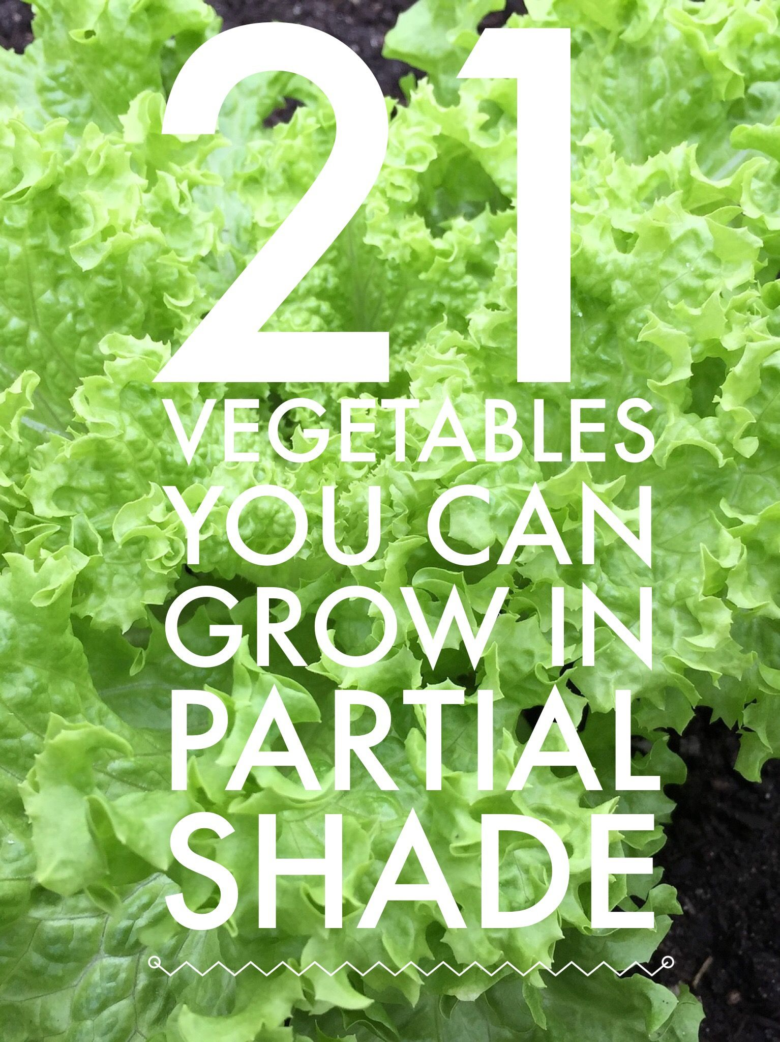 21 Vegetables That Can Grow In Partial Shade List Of 400 x 300