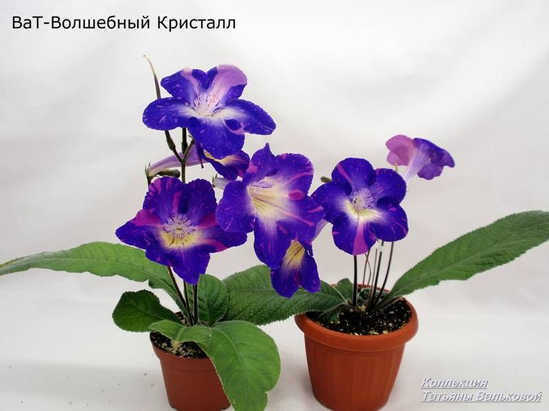 PB196357_800x600.jpg | Растения, Цветы, Фотографии