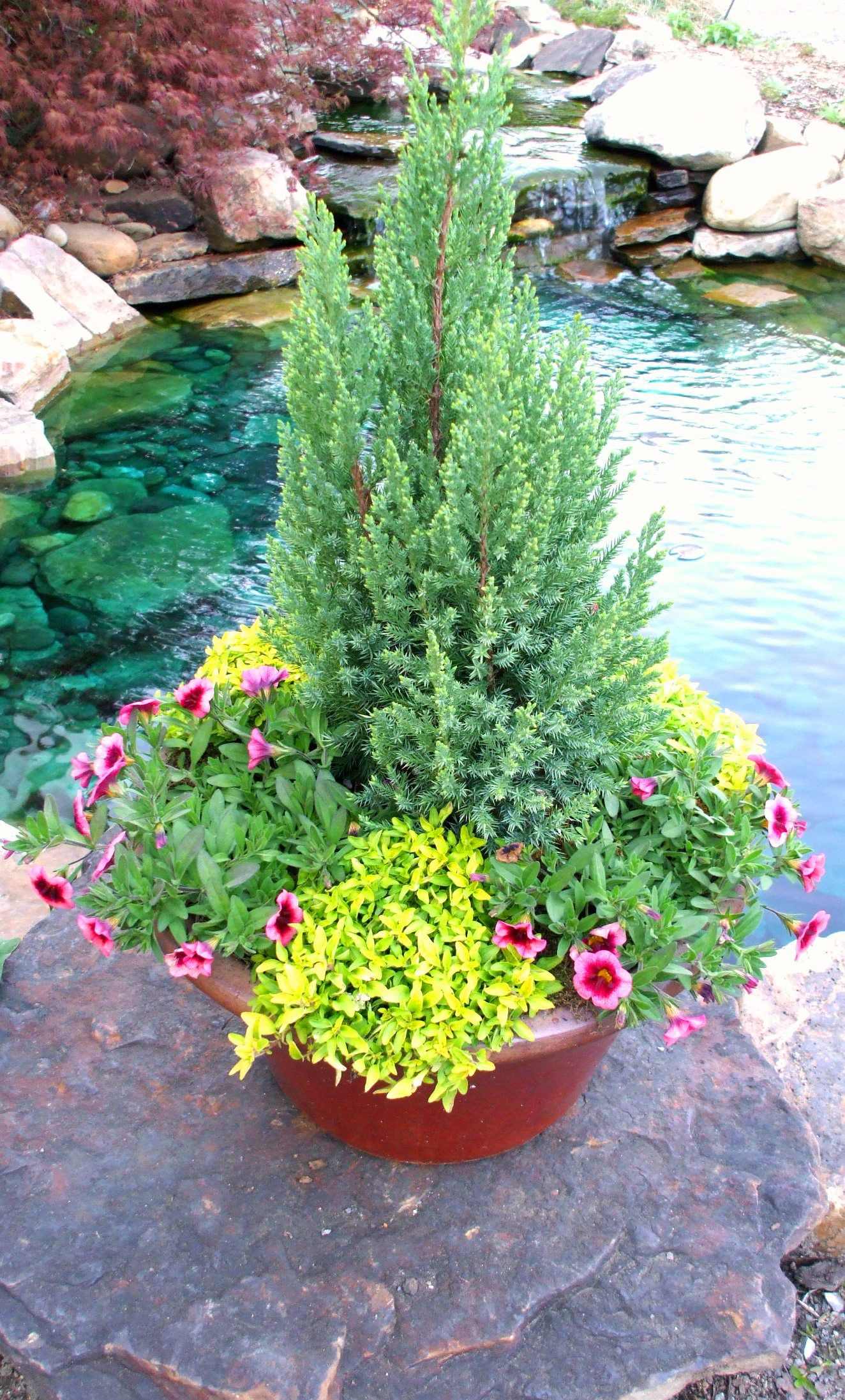This Is A Good Idea Anchor The Evergreen And Change Out The Seasonal Flowers Container Gardening Potted Plants Outdoor Container Plants