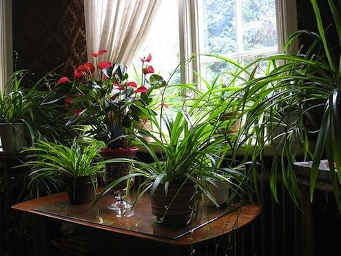 How To Care For Houseplants In Winter Indoor Plants And