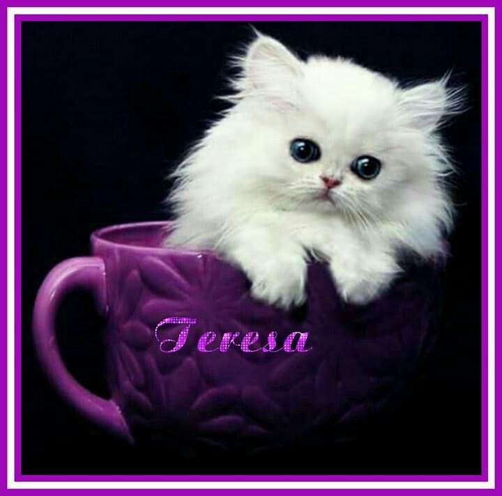 Pin By Teresa Fisher On Teresa White Persian Kittens Persian Kittens Kittens Cutest