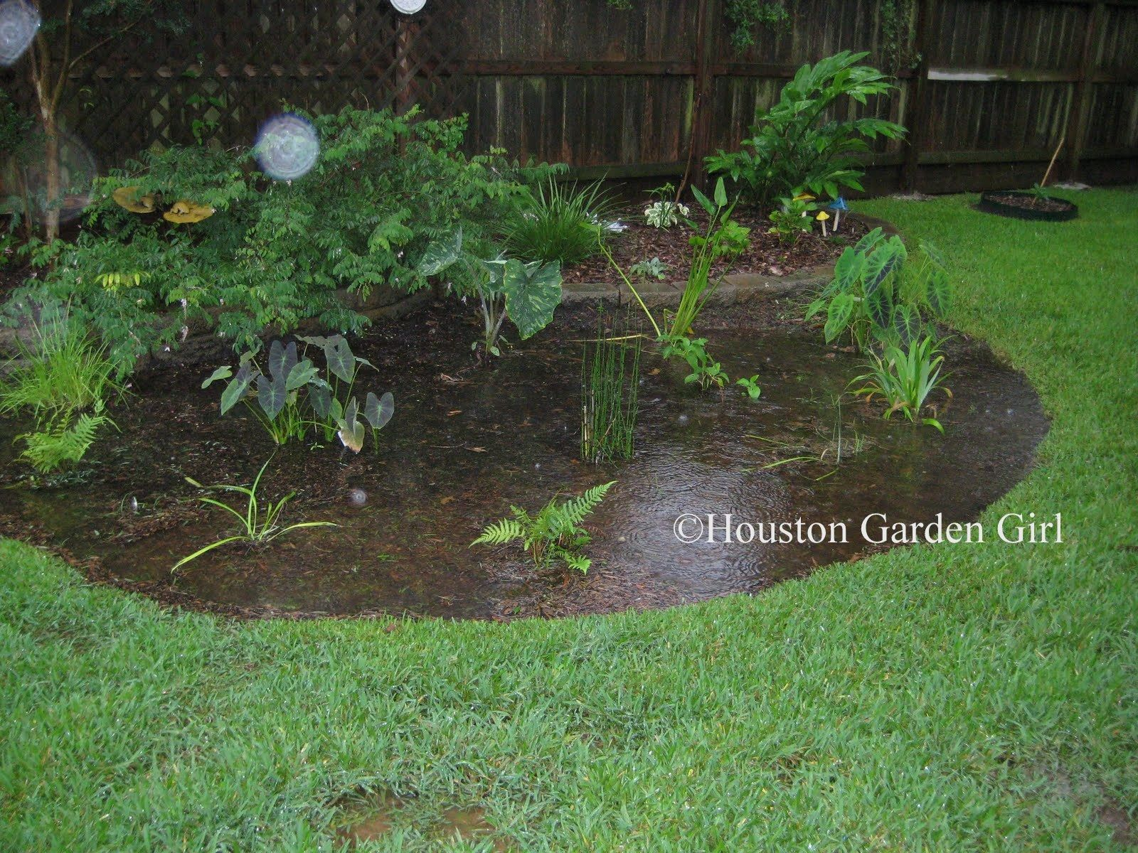 Backyard Water Drainage Issues » Photo Gallery Backyard