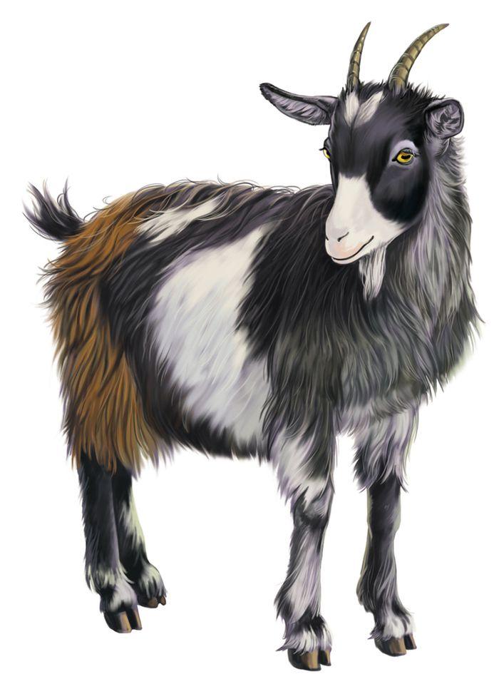 Картинки зверей для детей коза
