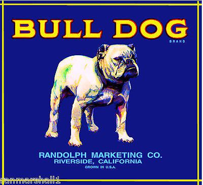 Riverside English Bulldog Dog Orange Citrus Fruit Crate Label Art