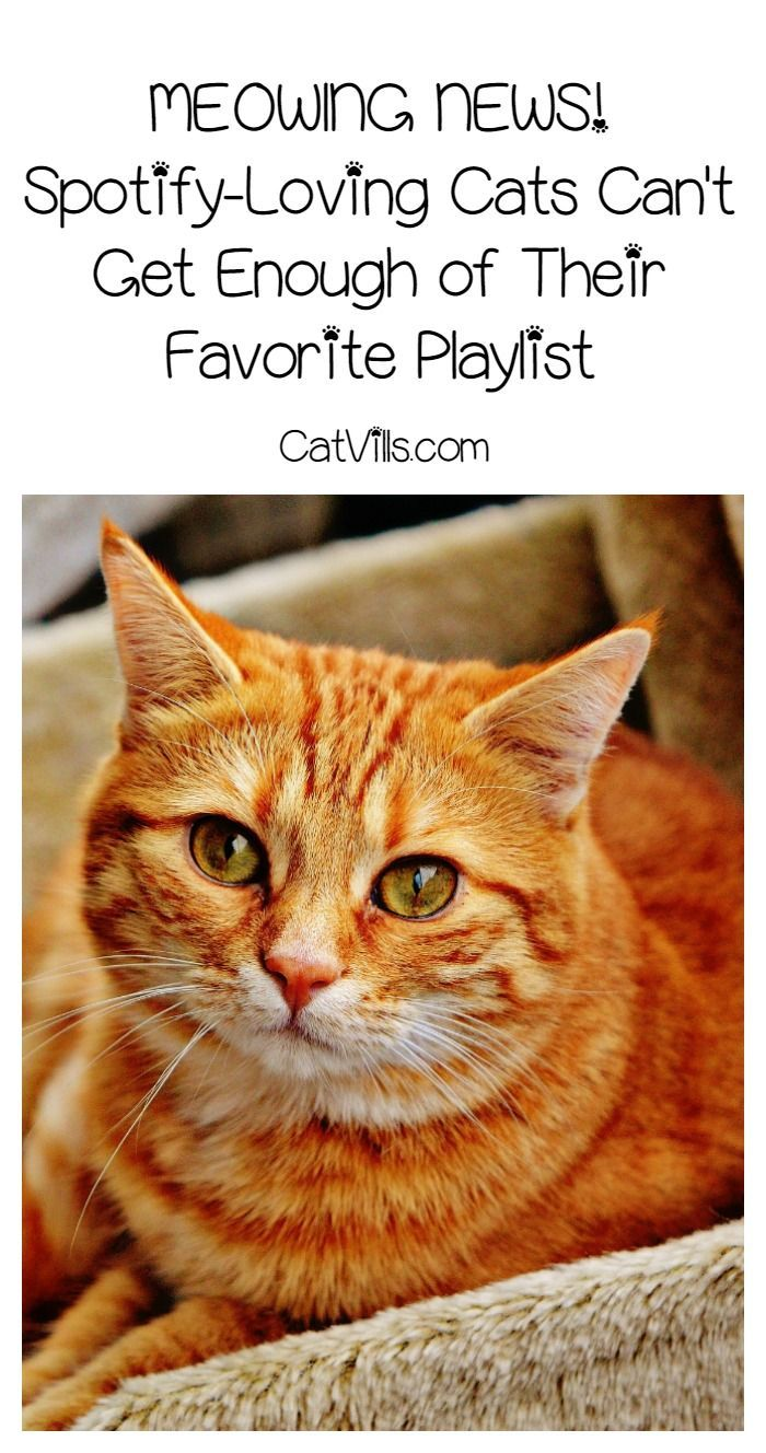 These Cats Can't Get Enough of their Favorite Playlist