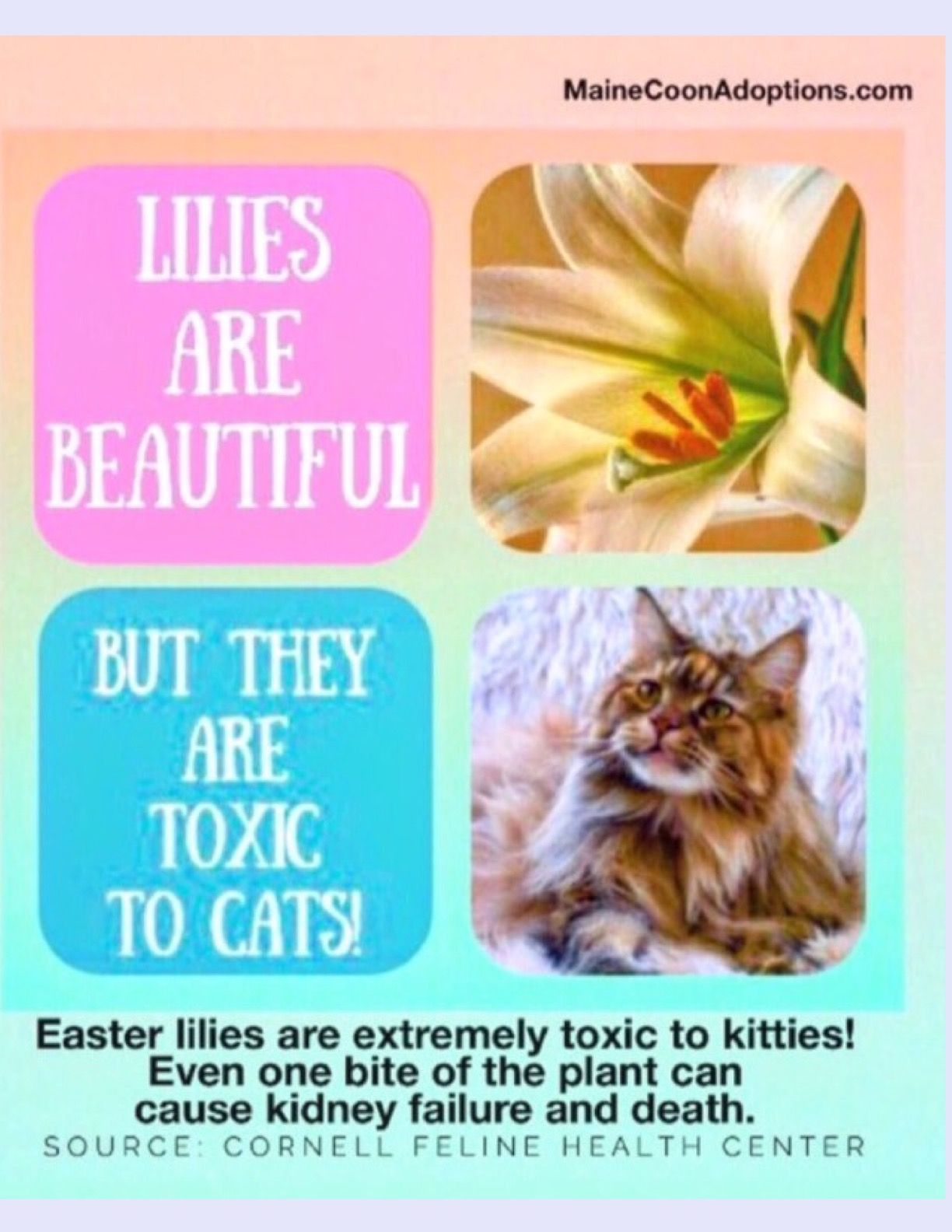 Safety Alert Many Types Of Lilies Are Dangerous To Cats All Parts Of The Lily Are Poisonous Including The Pollen Even A Feline Health Cat Rescue Cat Safety