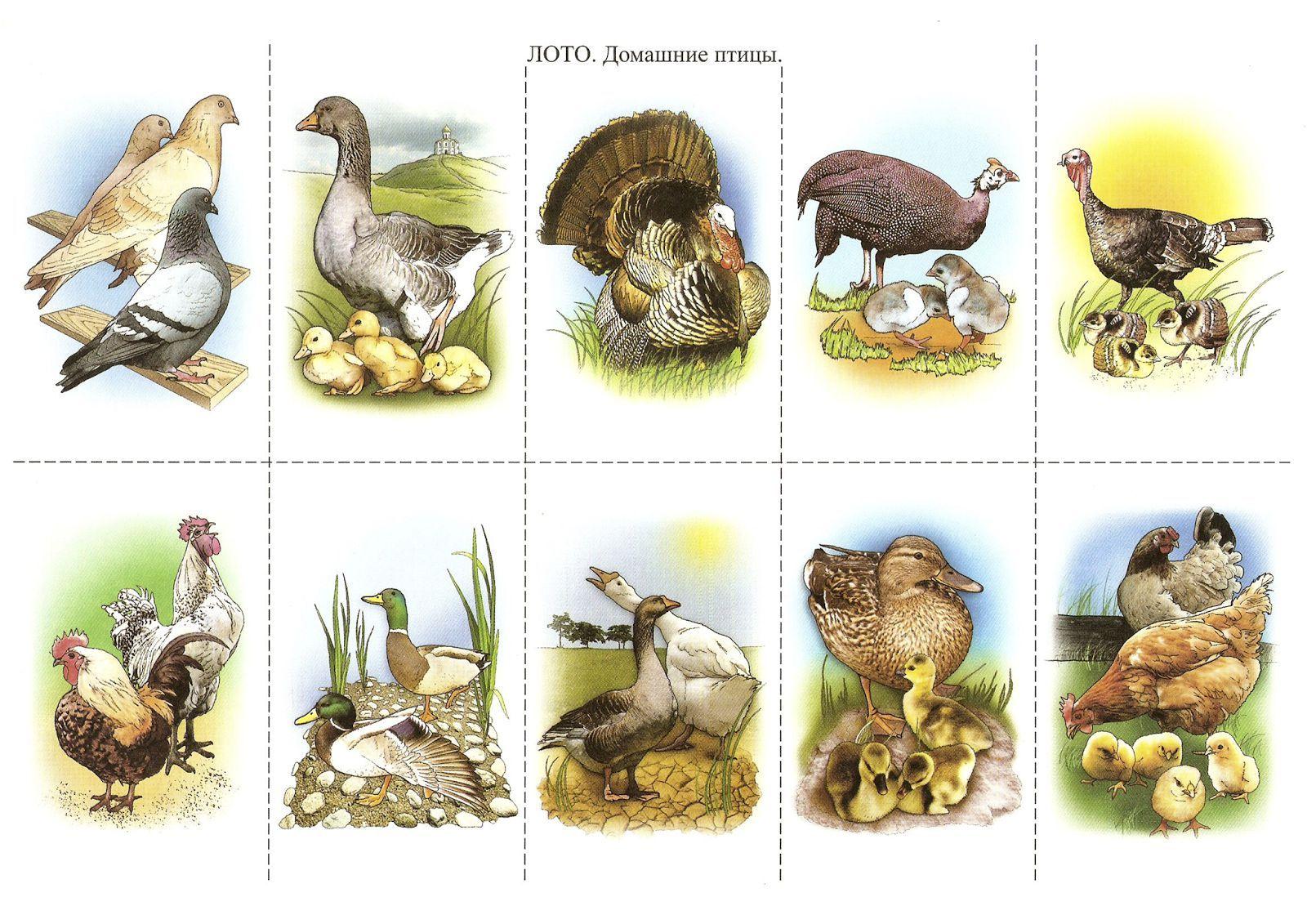 что картинки животных и птиц для доу фото, представленных данной