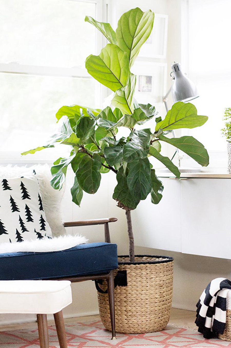 Indoor house plant with basket